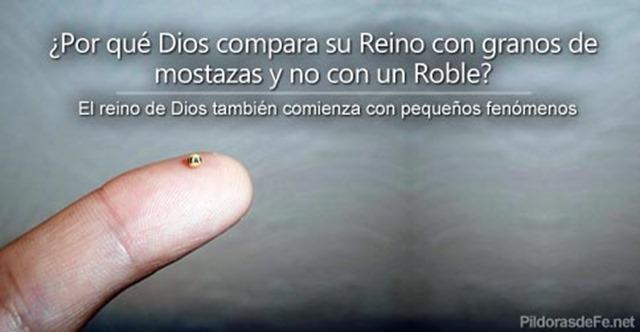 reino-dios-semilla-mostaza-roble
