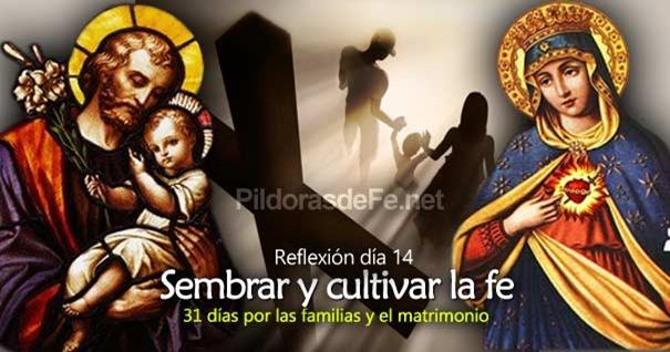 por-la-unidad-familias-matrimonio-dia14-sembrar-cultivar-la-fe