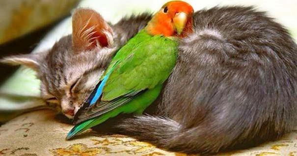 gato-loro-durmiendo-juntos-sin-pelea
